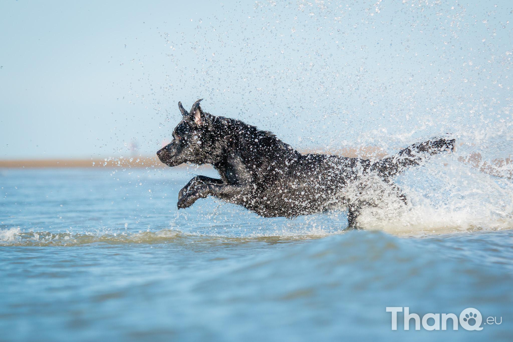 Portfolio hondenfotografie - Mylie (Labrador) en Mellow (Border Collie)