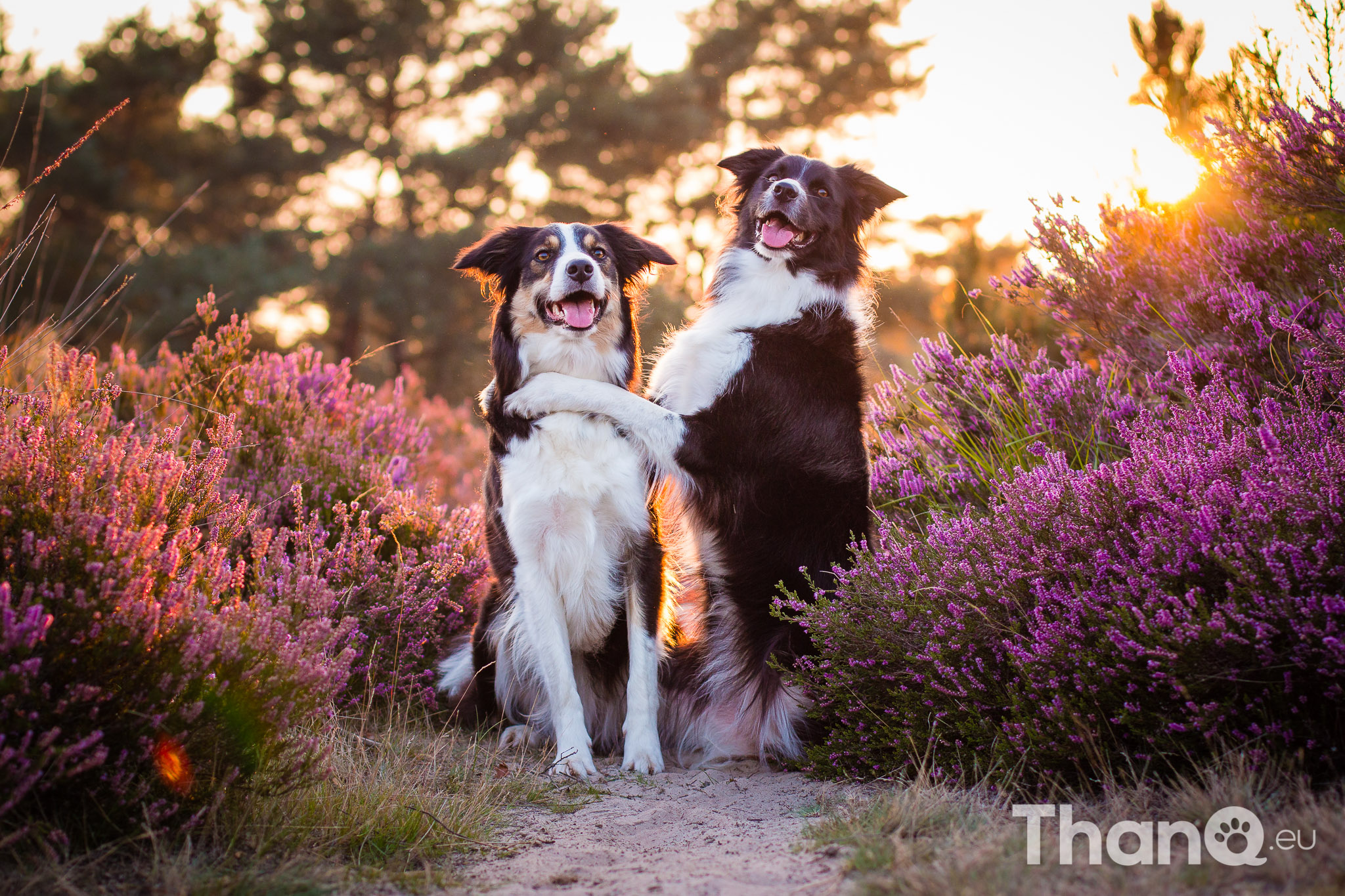 Portfolio hondenfotografie - Fenna knuffelt Jindi tussen de heide