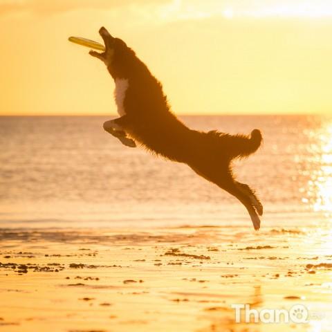 Hondenfoto van Jindi bij Dishoek strand Vlissingen