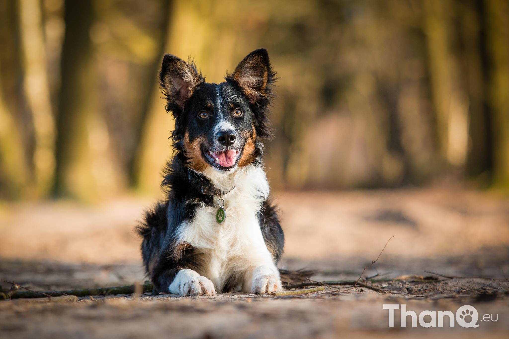 Hondenfoto's wandeling Bergen op Zoom