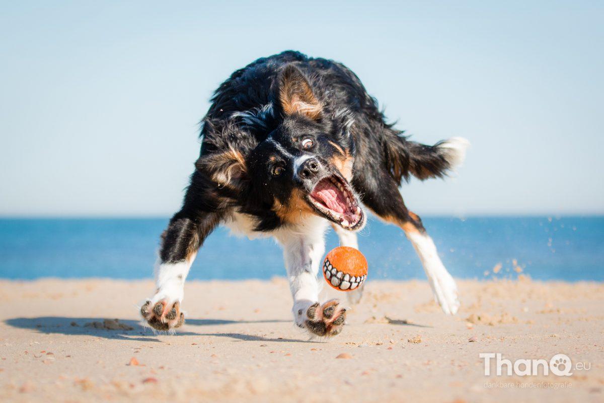 Jake heeft volledige focus op de bal, geweldig!