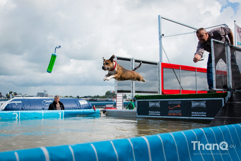Dock Diving Havendag Werkendam