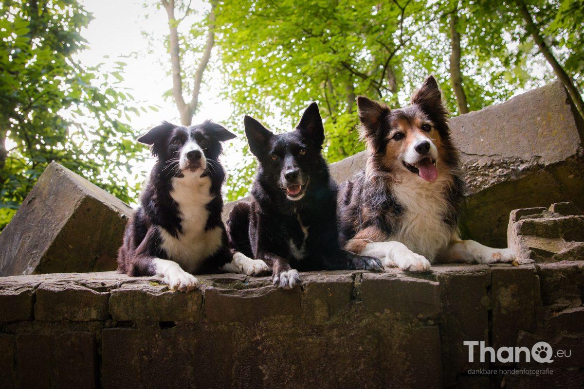 Kelly, Robbie en Sammy bij de kleine ruïne in het bos