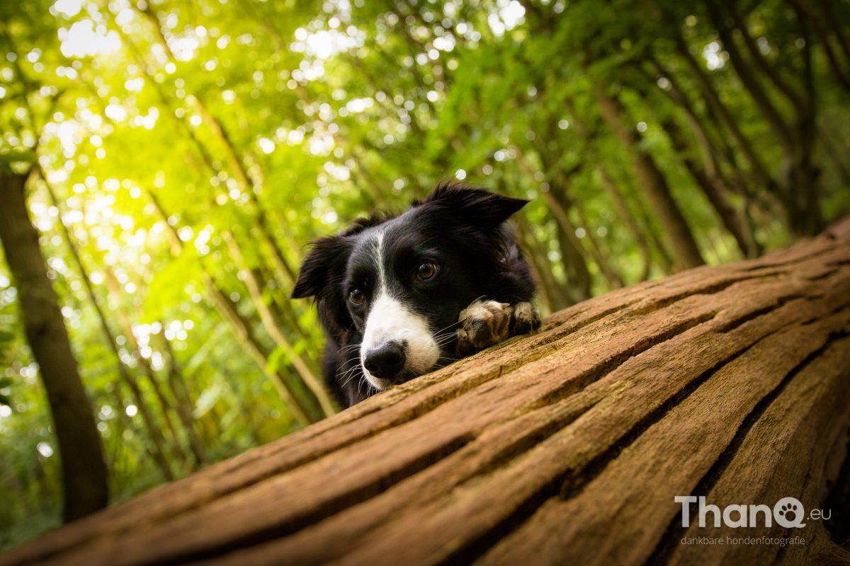 Sammy hangt op haar gemak over de boomstam