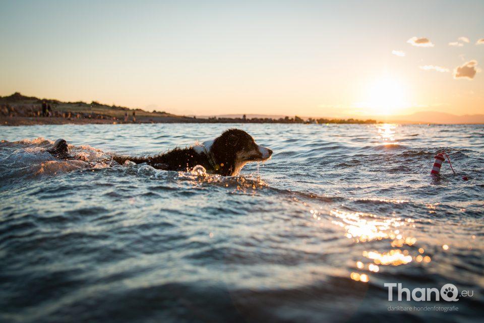 Jindi in het water in Kroatië