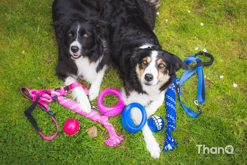 Border collies Fenna en Jindi
