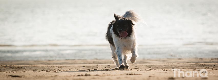 Lucy op het strand