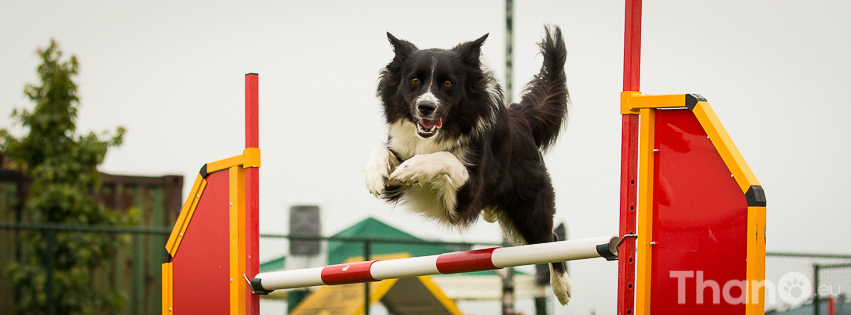 Fenna at International All Breeds Cup 2014